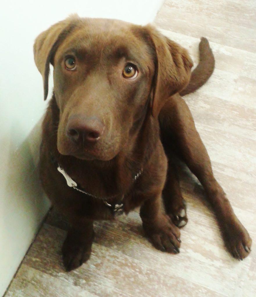 Hond Rhonda bij goudsmid